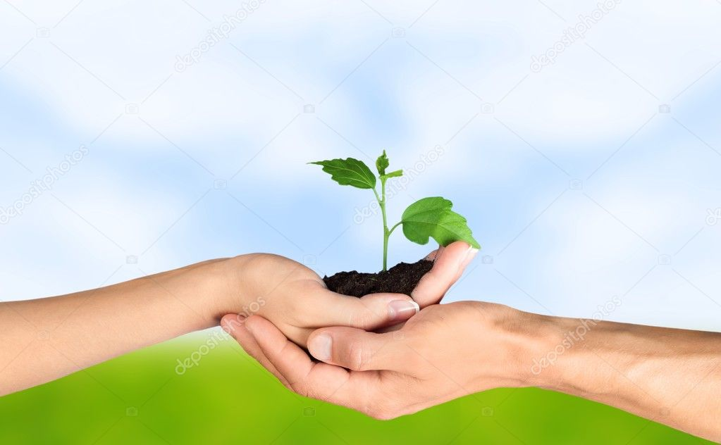 Green Plant in Human Hands