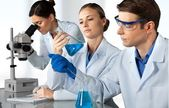 Fotografie  scientists working at the laboratory