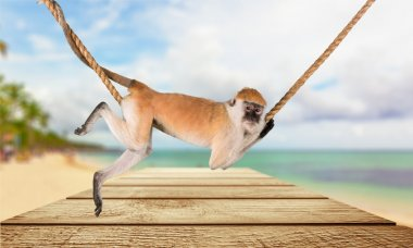 cute Monkey animal