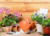 Zahradnictví, zahrady, léto