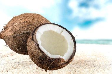 Coconut, Coco, Tropical Climate.