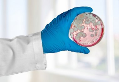 Analyze, background, bacteria.