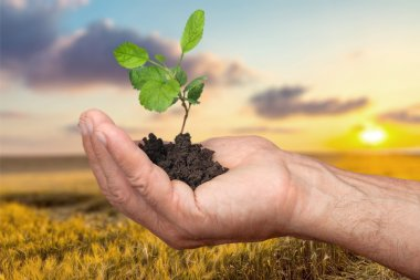 Organic, Responsibility, Development.