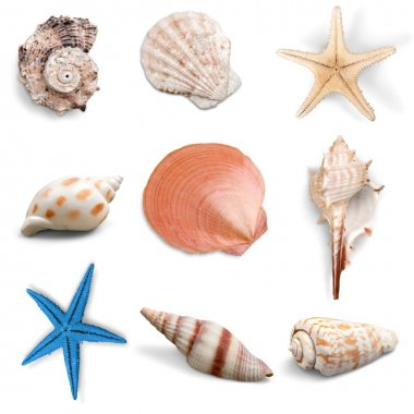 Collection, shell, object.