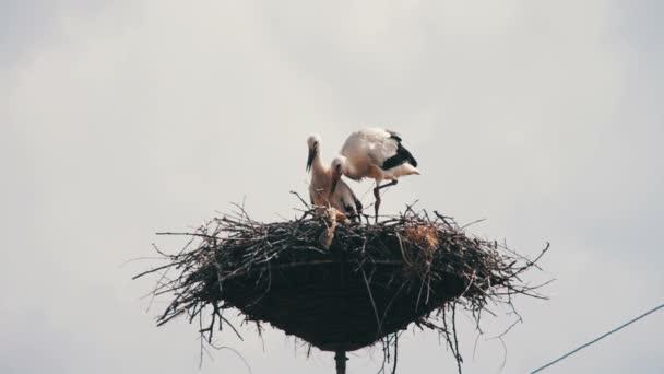 Čáp sedí v hnízdě na pilíř
