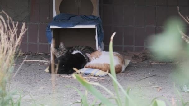 Obdachlose Katzen liegen auf der Straße in der Nähe einer Pappkiste. Zeitlupe