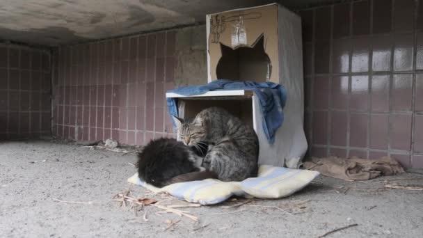 Kočky bez domova sedí na ulici poblíž kancelářské budky. Pomalý pohyb