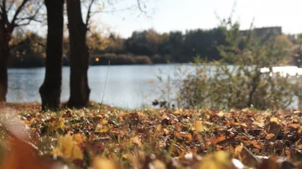 Beautiful Landscape of an Autumn Park by the River with Fallen Yellow Foliage