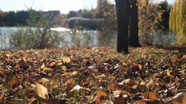 Krásná krajina podzimního parku u řeky s padlým žlutým listím
