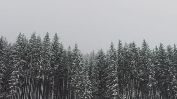 Silné sněhové přichází na pozadí vánočních stromků