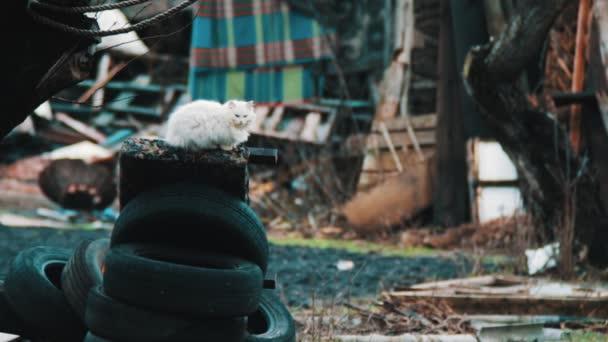 Kočka, která sedí na pneumatiky
