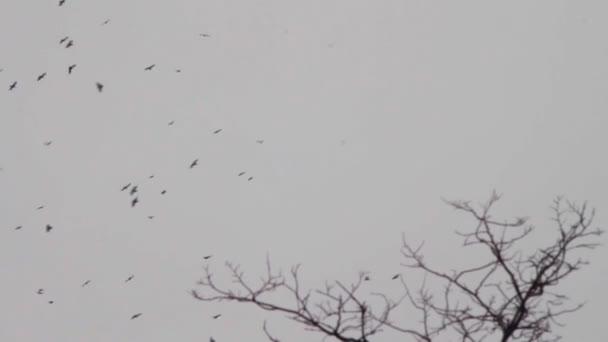 Vögel fliegen am Himmel und umkreisen den Baum