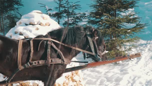 Hasznosítani ló áll, és hagyja, hogy a gőz ki az orrom