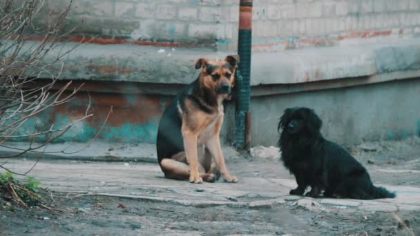 Two homeless dog sitting