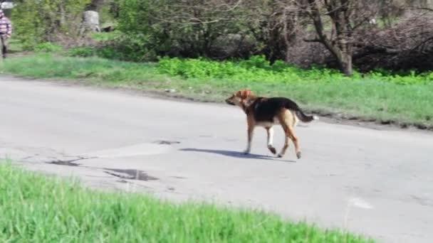 Hof, streunende Hunde laufen die Straße hinunter.