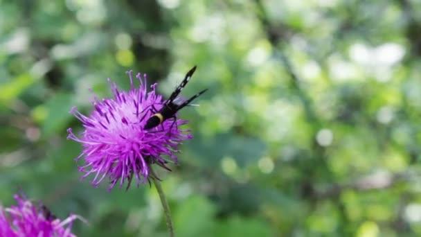 Fekete pillangó a fehér körökben, a a lila virág