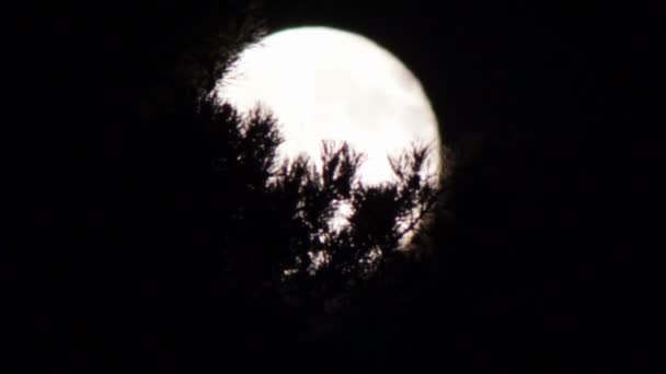 Full moon in the night sky over the trees.