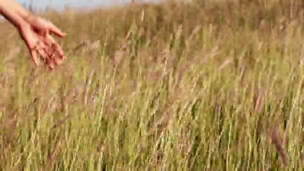 Dívka rukou dotknout trávy v oblasti louka