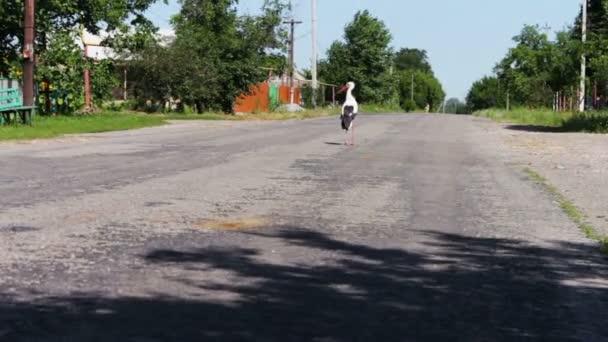 Gólya sétál az úton
