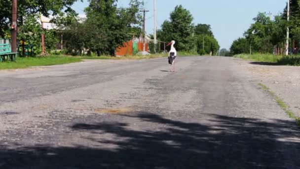 Čáp, chůzi na cestě