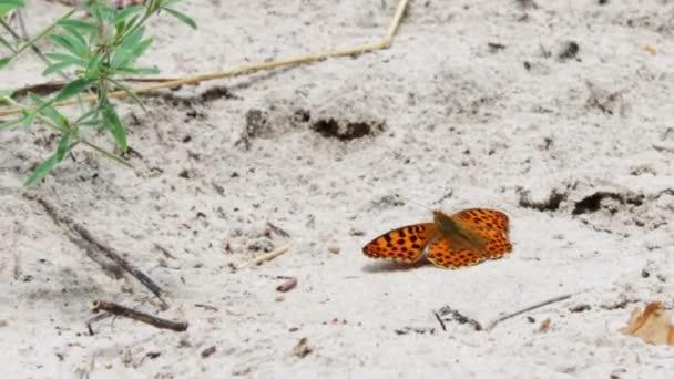 Gyönyörű sárga pillangó ül a földön.
