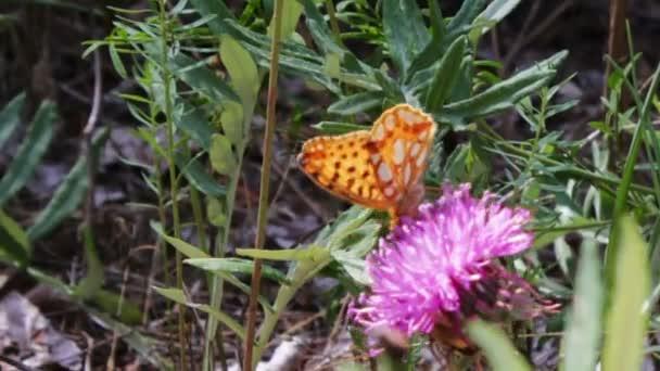 narancssárga butterfly, lila virág.