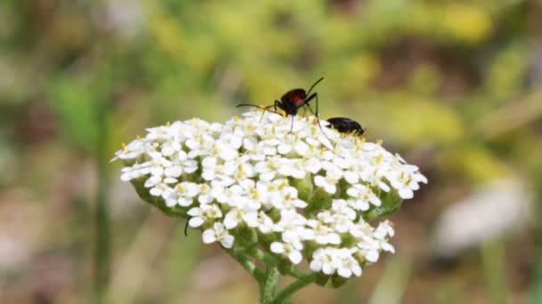 hmyz na květ