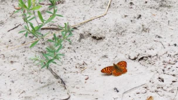 Krásný žlutý motýl sedět na zemi.