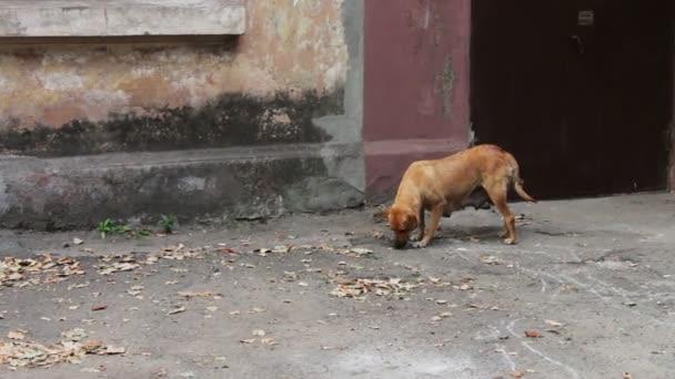 Obdachloser Hund auf der Straße.