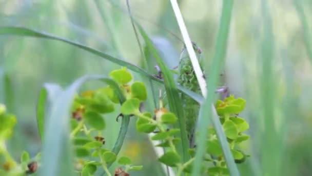 kobylka v zelené trávě