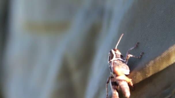 Nahaufnahme von Grasshopper
