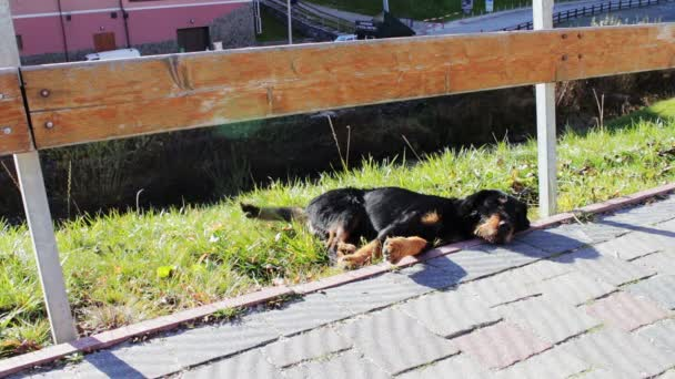 Zatoulaný pes ležící vedle silnice