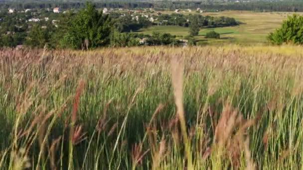 Luční trávy v poli kymácí ve větru na pozadí stromů