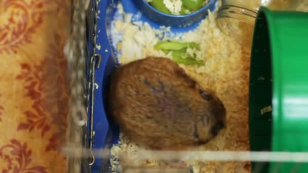 Hamster im Käfig.