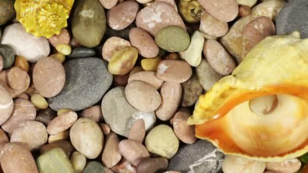 Moře kameny a mušle otočit