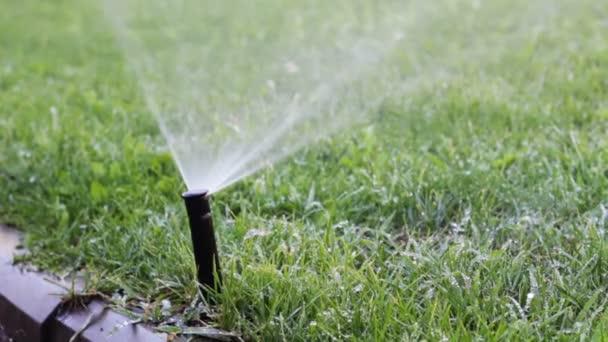 Wässern Den Rasen Automatisches Bewässerungssystem Stockvideo