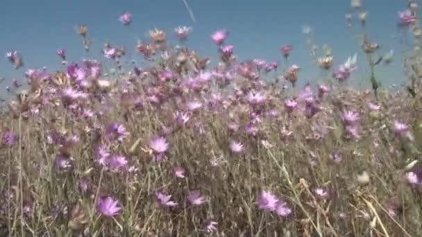 Video květy ve větru, krásnou krajinu oblasti divokých květů