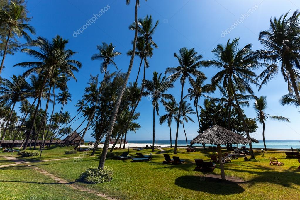 Palms on the beach in Mombasa, beach, mombasa,