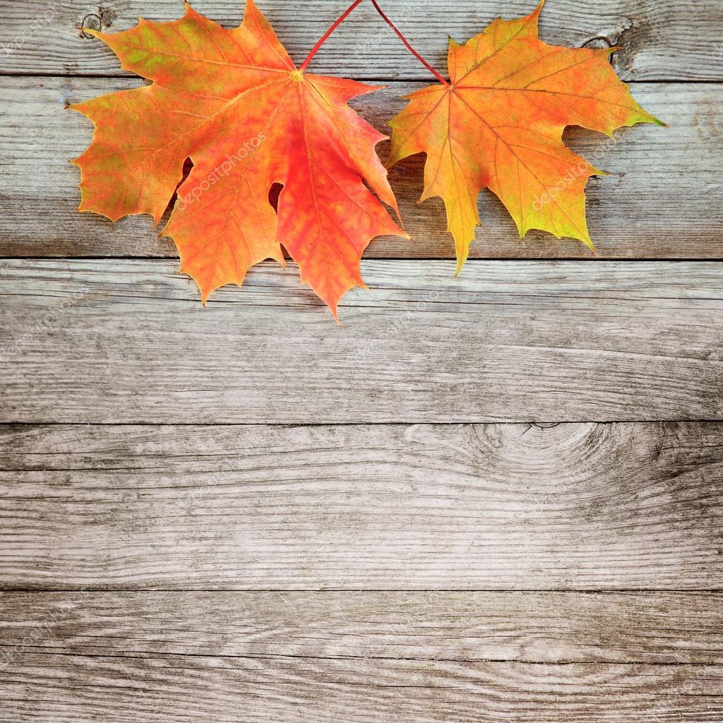 Otoño fondo con color arce hojas en tablero de madera antigua — Foto ...