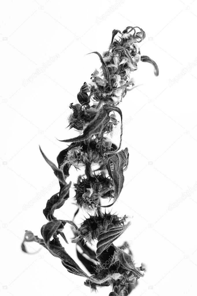 Macrophotographie De Noir Et Blanc Du Végétal Objet Avec
