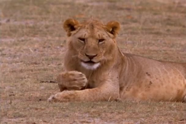 africká kočička videa nahé dospívající bikiny