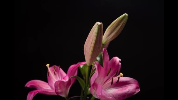 Virág virágzó idő, császári korona, Fritillaris Imperialis