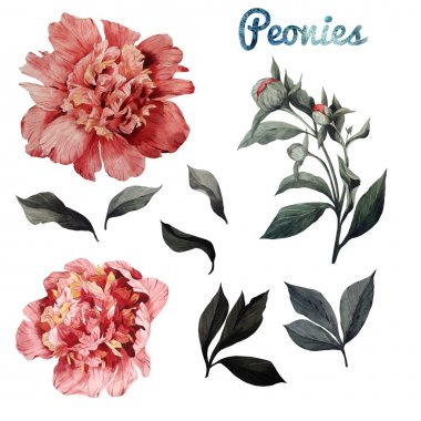 Watercolor Peonies and leaves