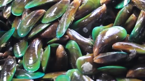 Friss tengeri élelmiszerek kagyló Nyers on Sale Table Kijelző héj ragyog Bőr nedves piacon