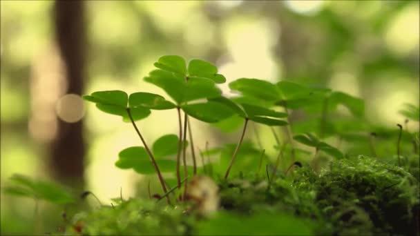 Jetele v lese