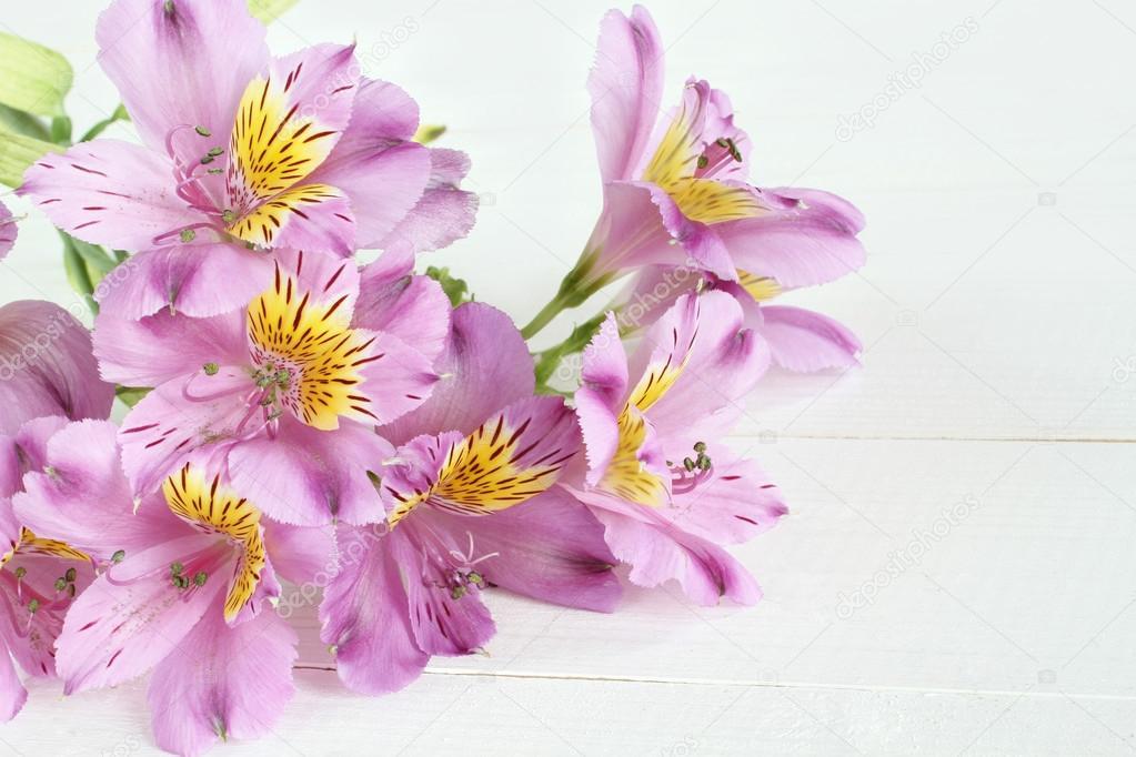Inkalilien lila Blumen auf weiß lackierten Holztisch — Stockfoto ...