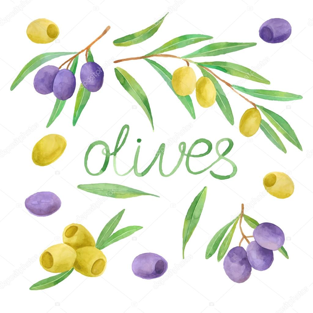 Hand drawn watercolor painting olives
