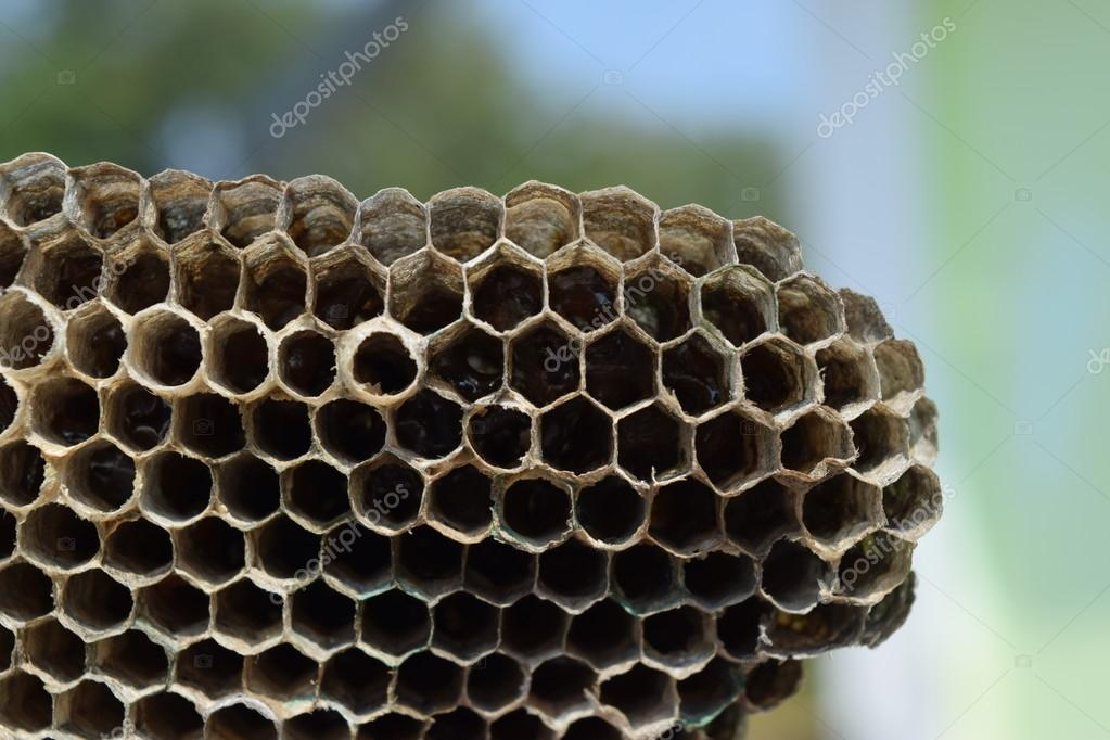 Hornets nest under a roof