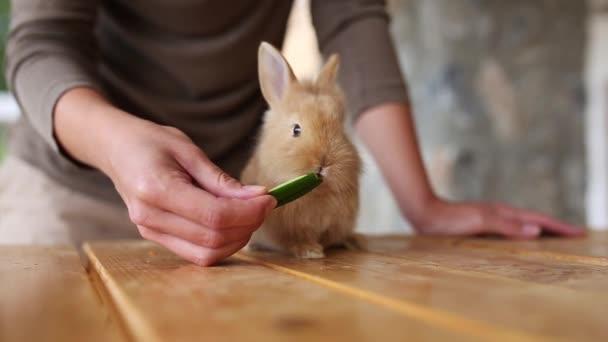 Szoros kilátás aranyos barna és szürke nyulakra. nő kéz etetés állatok uborka fa asztalon. Valós idejű teljes HD videó felvétel.