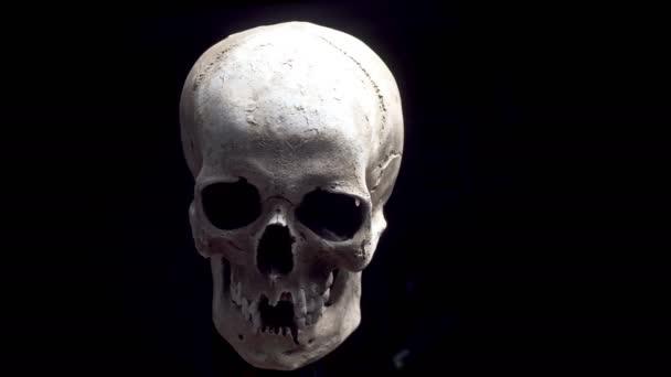 Lidská lebka v rozlišení 4k